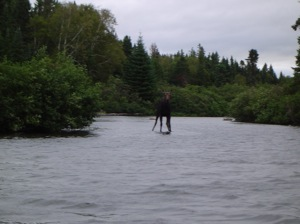 photo of a moose walking in a river
